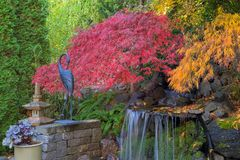 Home Garden Backyard Fall Colors by Waterfall Pond Stock Photography
