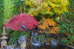 House Garden Backyard Waterfall Pond in Fall Season. Home garden backyard waterfall pond with maple trees bamboo decor in fall season color Stock Photos