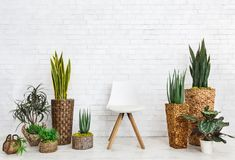 Home garden and chair on white background stock image
