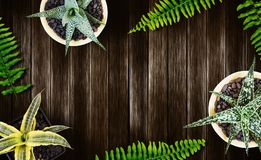 Home and garden concept of top view air plant on wood background Royalty Free Stock Images