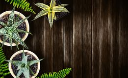 Home and garden concept of top view air plant on wood background Royalty Free Stock Photo