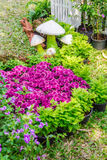 In home garden. Royalty Free Stock Photography