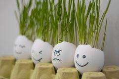 Angry and happy emotions faces drawing in the eggs shell. Fresh growing wheat sprouts. Home garden funny diy ideas stock images