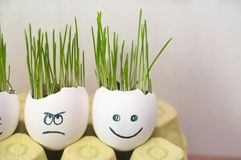 Happy and angry faces. Home garden funny diy ideas stock photo
