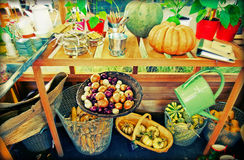 Home garden harvest Royalty Free Stock Photography