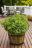 Home Garden Herbs on Outdoor Patio Royalty Free Stock Images