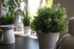 Home garden Stock Image