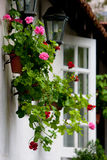 Home Garden Scenery. Flowerpot decoration hanging on the wall in the home garden stock photography