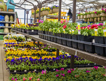Home and garden store in spring Stock Photo