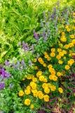 In home garden. Stock Image