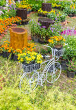 In home garden. Stock Photos