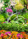 In home garden. Royalty Free Stock Photo