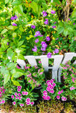 In home garden. Royalty Free Stock Image