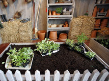 Home gardening Stock Photo