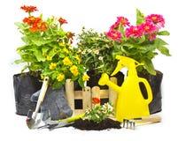 Home gardening Royalty Free Stock Photos