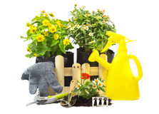 Home gardening Royalty Free Stock Images