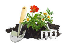 Home gardening Stock Images