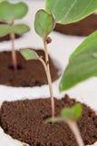Home gardening Stock Image