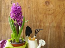 Home gardening - flowers and herbs Royalty Free Stock Image