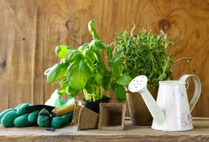 Home gardening - flowers and herbs Stock Images