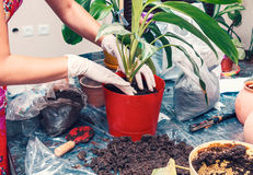 Home gardening Royalty Free Stock Photo