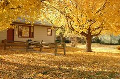 A home with a golden autumn front yard Stock Photo