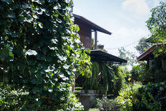 Home through the green garden Royalty Free Stock Images