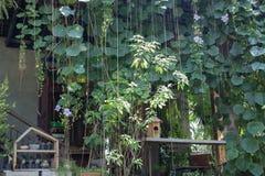 Home through the green garden Stock Photography