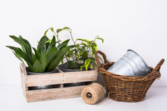 Home green plants in wooden box Royalty Free Stock Photo