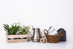 Home green plants in wooden box Royalty Free Stock Images