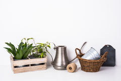 Home green plants in wooden box Stock Photography