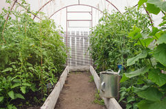 Home greenhouse with plants Stock Image