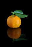 Home grown calamondins Stock Photo