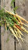 Home Grown Carrots on Rustic Wood royalty free stock photo