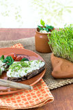 Home-grown garden cress as healthy vitamin supplier Stock Image