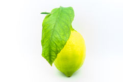 Home grown lemon Royalty Free Stock Image