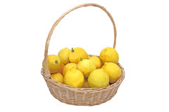 Home grown lemons Stock Photography