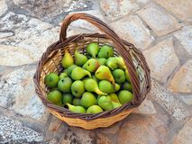 Home Grown Pears in cane Basket Royalty Free Stock Image