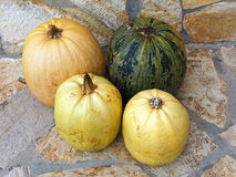 Home Grown Pumpkins Royalty Free Stock Images