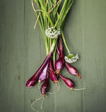 Home Grown Red Onions for your health Stock Photo