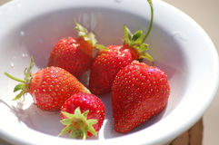 Home grown strawberries Stock Images