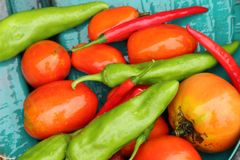Home grown tomatoes & peppers Stock Photos