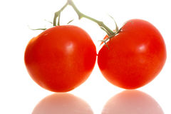 home grown tomatoes on the vine Royalty Free Stock Photo