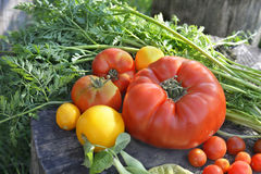 Home grown vegetables Royalty Free Stock Photos