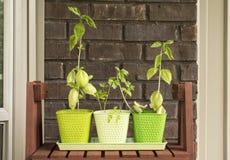Home Herb Garden Stock Photo