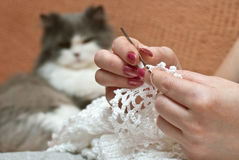 Home hobby. The women's hands with knitting and cat out of focus Stock Image