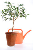 Home Hothouse, Sapling. Sheet, Stem, Pot, Clay, Ceramics, Sprinkling can royalty free stock photos