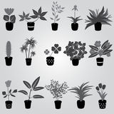Home houseplants and flowers in pot grayscale Stock Image