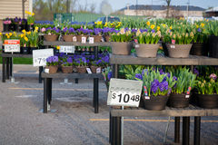 Home Improvement Shopping: Flowers Stock Photos