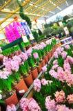Home improvement store. Koçtaş, home improvement store, garden section stock photography